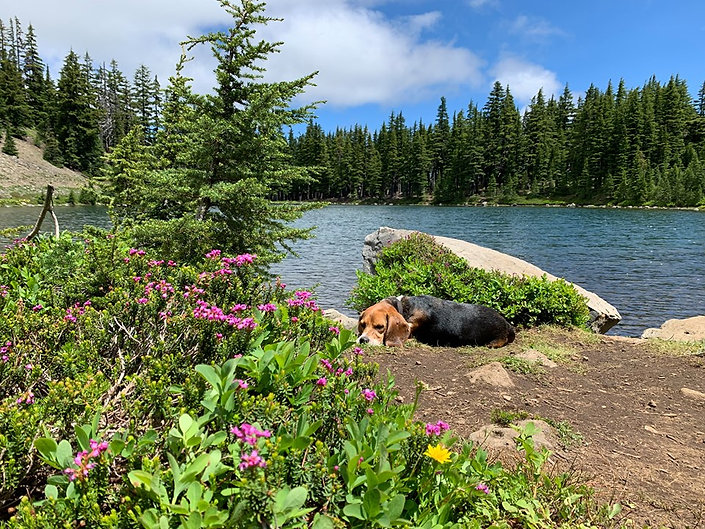 07-27 Rockpile Lake with Misha.jpg