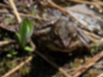07-11 Camp 10 Frog.jpg