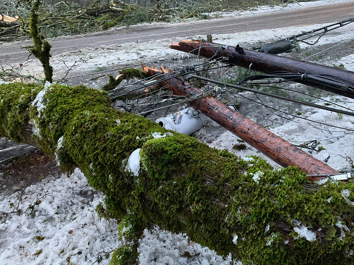 14-Downed Tree and Transformer.jpg