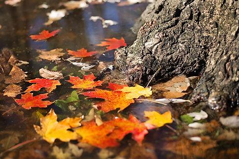 autumn-2900166_1920.jpg