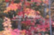 Leaf%20Season_3_colour_edited.jpg