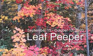 Leaf Season_3_colour.jpg