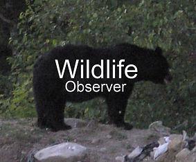 Bear_cropped.jpg
