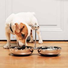 Royal Jack silver plated pet bowls