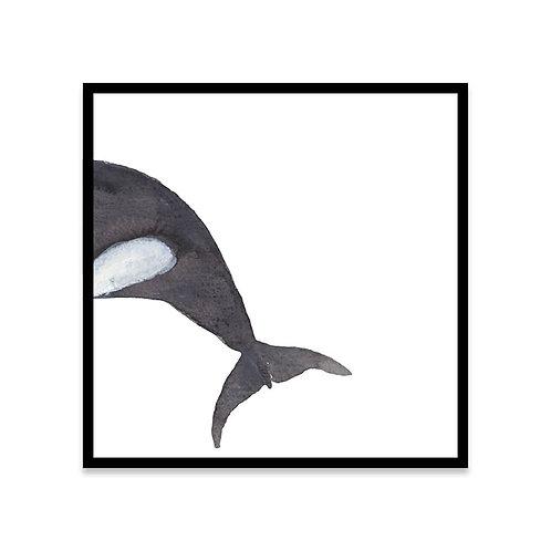 Cuadro Orca B