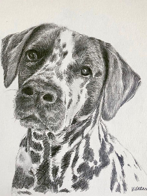 Retrato mascota personalizado a lapiz blanco y negro