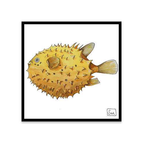 Cuadro Blowfish