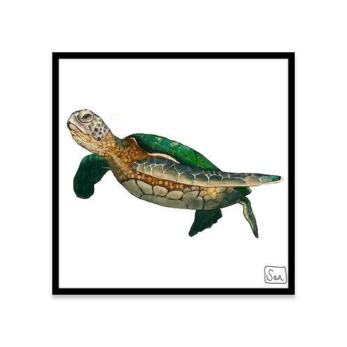 Cuadro Tortuga