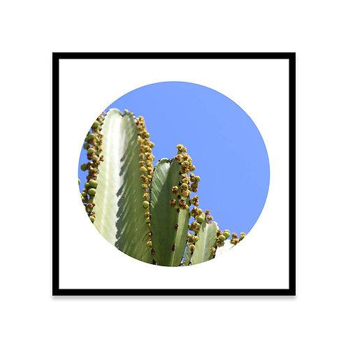 Cuadro Sunny cactus