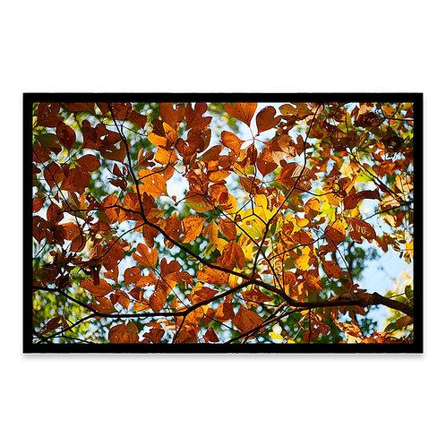 Cuadro Leaves