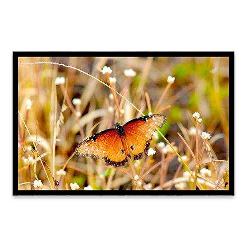 Cuadro Mariposa con alma de león