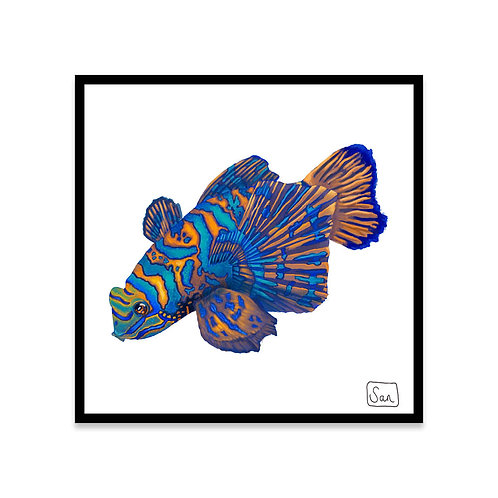 Cuadro Mandarin fish