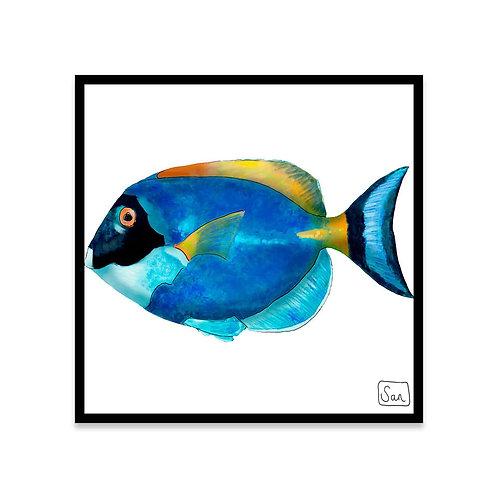 Cuadro Surgeon fish