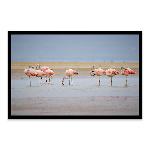 Cuadro Flamingos en Paracas