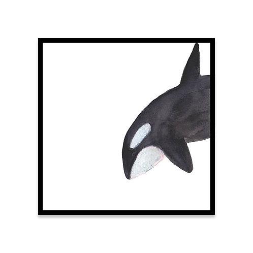 Cuadro Orca A