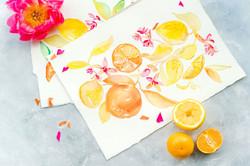 jchardesigns-citrus-watercolor-painting.