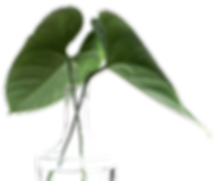 sarah-dorweiler-211779-unsplash.png