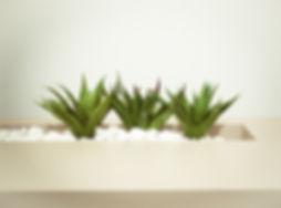 three-green-aloe-vera-plants-904621.jpg