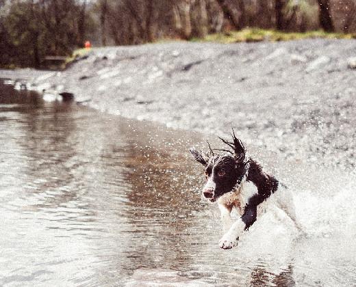 Dog walker lympstone.jpg