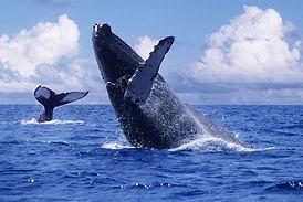 ballenas1.jpg