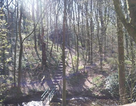 Borsdane Woods