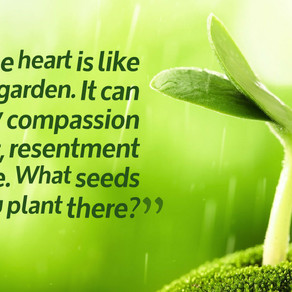 What Seeds Are You Planting in Your Heart, Especially When It Comes to Yourself? #inspiration #Thurs