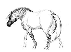 «Лошадь»