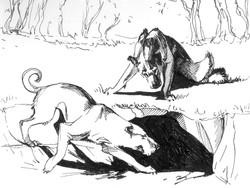 «Собаки»