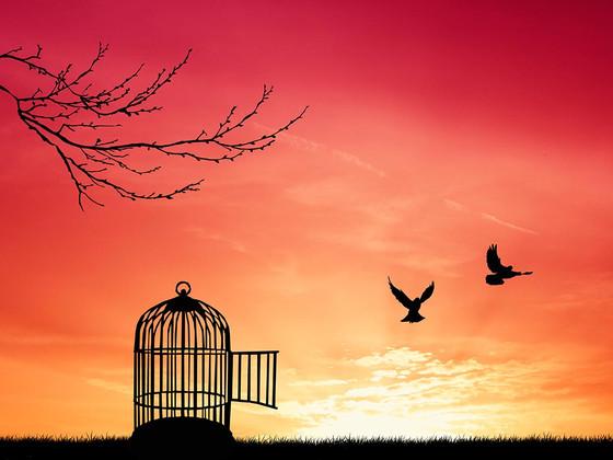 Free to Set Free - Day 1