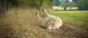 Picture Scripture: Week 4- Sheep (downcast, dispirited)