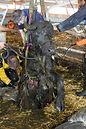 """Die Susy Utzinger Stiftung für Tierschutz finanziert die Kampagne """"Auch Nutztiere haben professionelle Rettungen verdient"""" des GTRD"""
