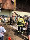 Feuerwehr holt Rind aus Jauchegrube