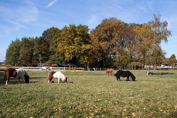Ponies auf der Wiese.jpg
