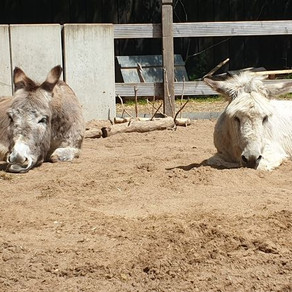 Hier chillen unsere Esel in der Sonne! ☀️