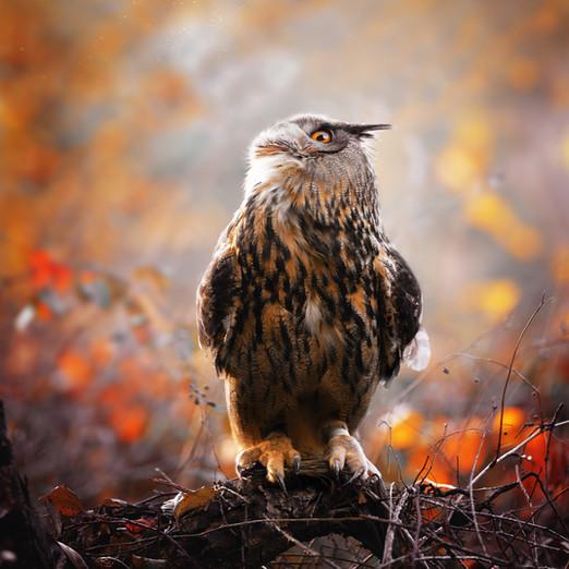 Tierfotografie/Wildtiere