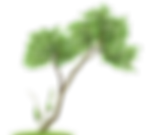 Transparent_Tree_PNG_Clipart.png