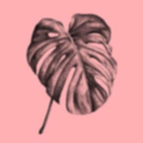 Palme_Monstera-Deliciosa_pink_Illustrati