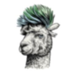 Samsung_Alpaca_A.jpg