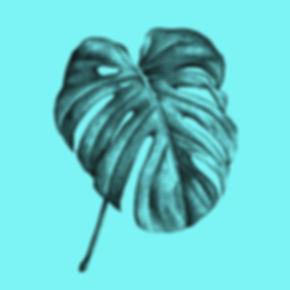 Palme_Monstera-Deliciosa_blue_Illustrati
