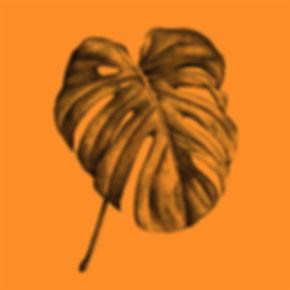 Palme_Monstera-Deliciosa_orange_Illustra