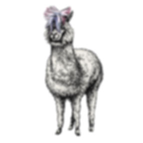 Samsung_Alpaca_C.jpg