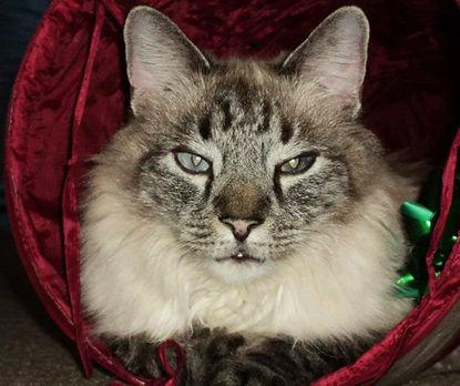 new_cat-e1580824525513.jpg