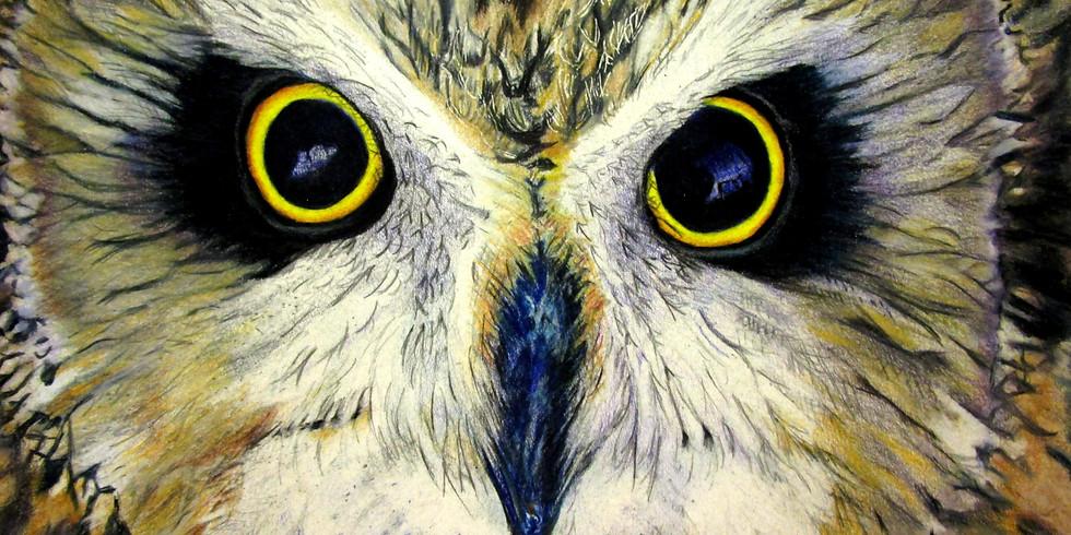 Bird's Eye View Art Show