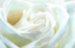 Luminous White Rose Step 12  Green Ochre