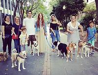 grupo personas pasean perros pataners