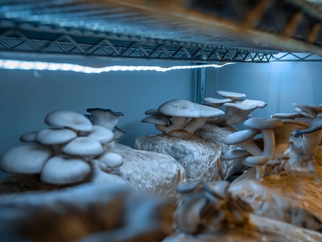 National Mushroom Network