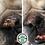 Thumbnail: Snout Soother® Balsamo curativo naso