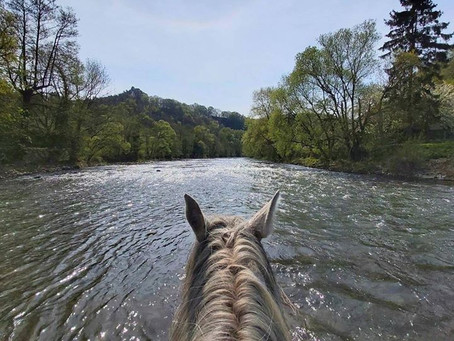 3. Four day trip in nature with my horse Kilimanjaro
