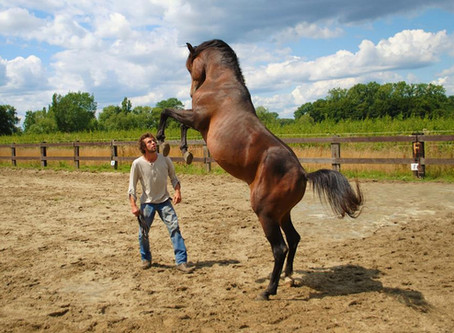 2. The influence of perfectionism in our lives and in our relationships with horses