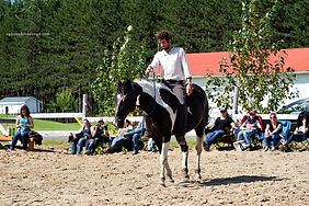 paard canada.jpg